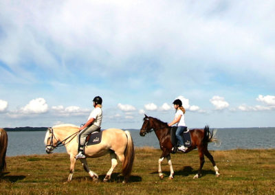 Au pair pour chevaux en Irlande