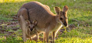 Au pair à Dubbo, en Australie